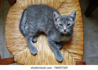Small European tiger cat