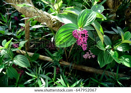 Small Evergreen Shrub Pink Showy Flowers Stock Photo Edit Now