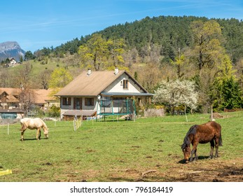 Small farm and horse in Chichilianne, small countryside town in France