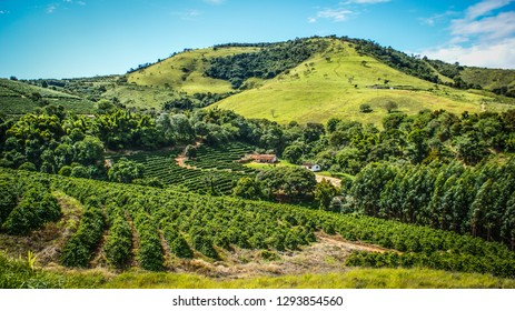 Small farm producing coffee in Brazil