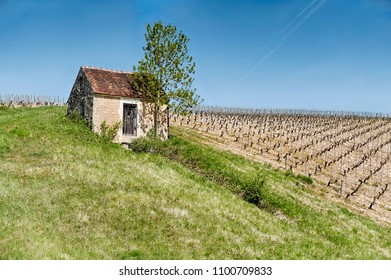 A small farm shed in the countryside is located next to a vineyard on the rolling hillls near Chablis, France.