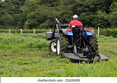 Small farm tractor bush hogging on a grass field