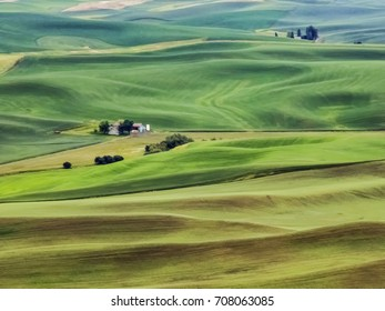 Small farmstead isolated among rolling green and dark yellow agricultural fields in The Palouse, eastern Washington, USA, with digital painting effects, for regional, rural and seasonal themes