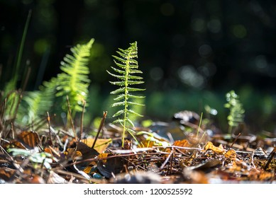 small fern leaf is growing on the forest ground, nature background with copy space, selected focus, narrow depth of field