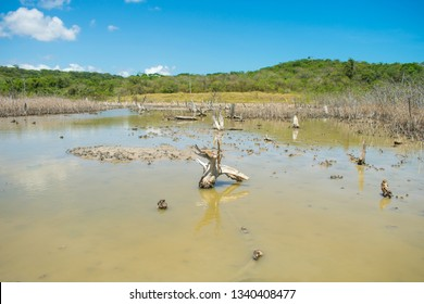 Small fiddler crabs on a mangroove area in the countryside of Itamaraca Island, Brazil