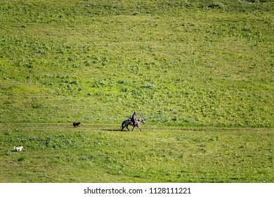 A small figure of a lonely northern shepherd on a horse with two dogs against the backdrop of a huge greenback field. Photo - minimalism