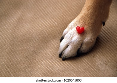 small figurine of heart and paws of a dog