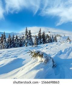 Kleine Tanne ist Schnee geneigt auf dem Abhang vor. Morgens Winterlandschaft mit schneebedeckten Bäumen, Karpaten.