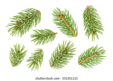 Small Fir tree branch isolated on white background with clipping path