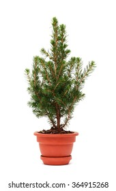 Small fir tree in ceramic pot on white background