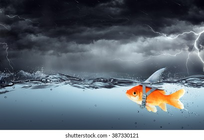 Small Fish With Ambitions Of A Big Shark Swimming In Tempest - Business Concept