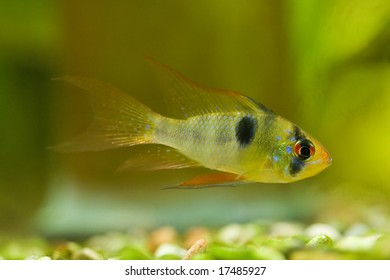small fish on green background