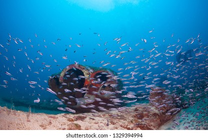 Small fish schooling and congregating around the airplane wreck.