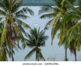 A small fishing boat glides past palm trees on the ocean at Koh Chang island in eastern Thailand