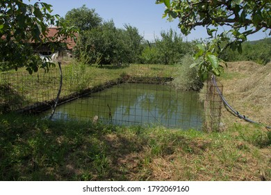 Small fishpond in the yard