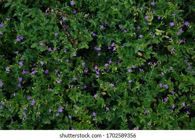 small flora purple flower in garden