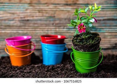Small flower plants with soil and pots ready for planting