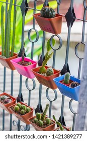 Small flower pots made of colorful plastic, planted cactus, hung on the window.