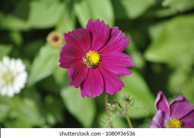 Purple flower with yellow center images stock photos vectors a small flower with purple petals and a yellow centre mightylinksfo Image collections