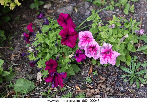Small Flowering Summer Border Plants Looking Stock Photo Edit Now