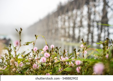 small flowers foreground and soft focus longest wooden bridge of Thailand Background