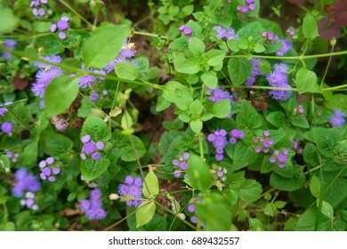 Small flowers on a background of green leaves