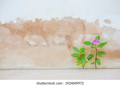 Small flowers and plants growing beside the wall