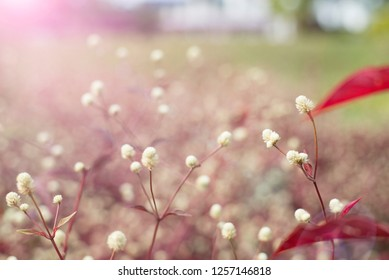 Small flowers with red leaves. Flower field background.