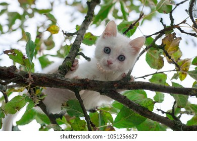 a small fluffy kitten sitting high on the branches of a tree and afraid to jump down