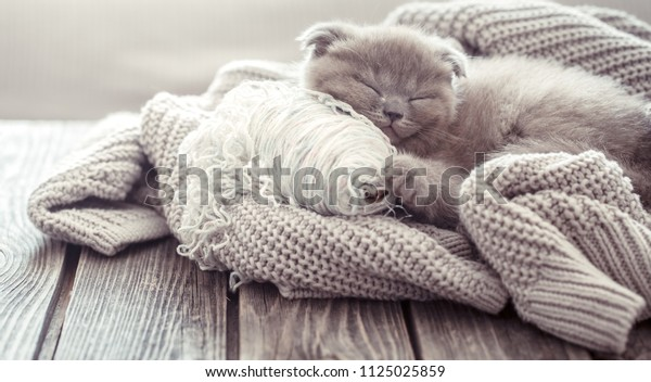 A small fluffy kitten is sleeping on a knitted sweater, on a wooden table, space for text