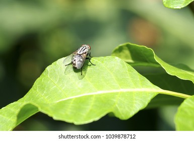 Small fly insect on the tree leaf in Thailand summer season
