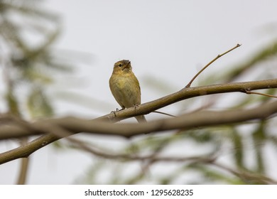 Small flycatcher on a  branch of tree