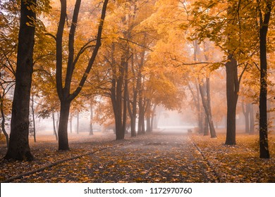 small fog is in autumn in a central park