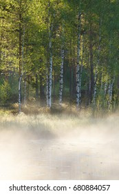 Small foggy forest pond at sunrise summer morning