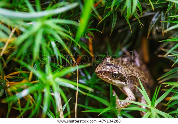Small forest frog on grass in natural habitat. Shallow focus