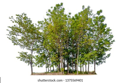 small forest isolated on white background
