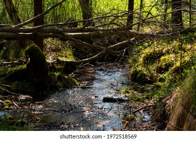 small forest river with clear water, over which a tree trunk has fallen.