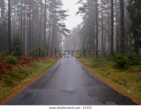 A small forest road on a foggy spring morning