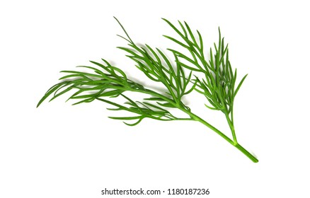A small fragment of a dill branch isolated on a white background a macro shot of a top view