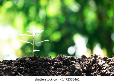 Small and fresh green trees are growing, with watering hands carefully preserving the concept of saving the world and reducing global warming.
