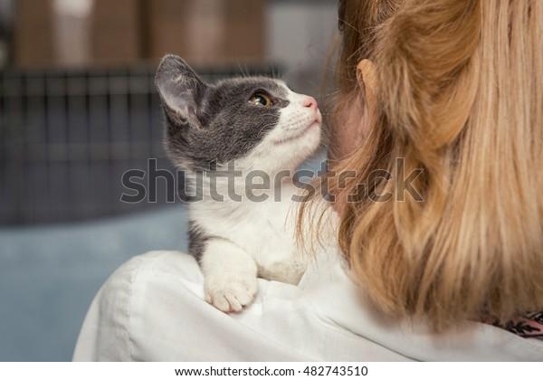 Petit chaton effrayé entre les mains du médecin du refuge pour les animaux sans abri