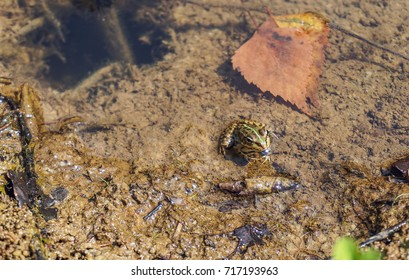 a small frog