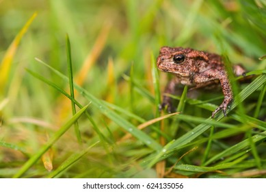 Small frog in meadow