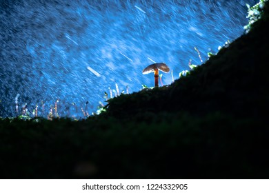 Small fungi mushroom on green moss with dark backgrounds and a tree trunk. Autumn scene with backlighting, atmospheric lighting and macro details