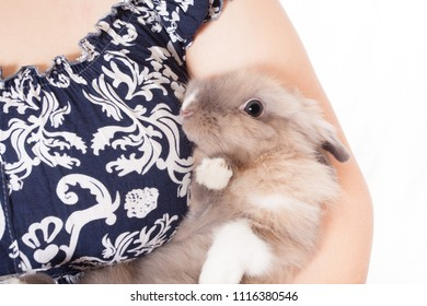 small, funny Dutch decorative rabbit sits on the hands of a loving and caring hostess. (isolated on white background)