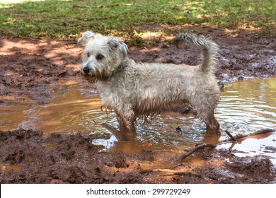 Small furry dog playing in the mud