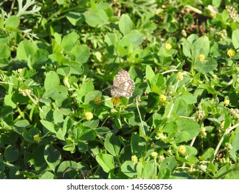 small garden butterfly on a sunny day