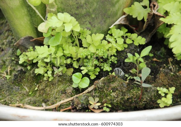 small garden fern and other plant