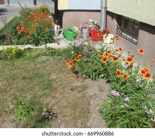 Small garden with flowers near the house