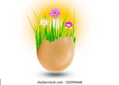 Small garden with green grass and lotus flowers in the eggshell isolated on white background, nature conceptual